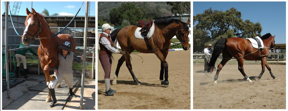 Arlyn's program begins with body work to help the horse 'unlock', an intro to the lines and long lining the horse. The benefits of the long line far exceed those of the lounge line.