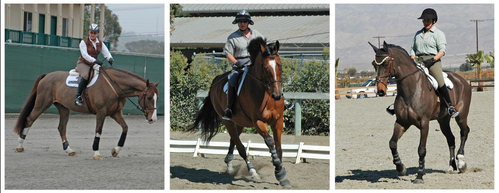 After the horse has been taught to stretch (made longer or wider without tearing or breaking), phase 2 teaches the horse to become more supple. Training the horse to become supple (bending and moving easily and gracefully; flexible) will allow the horse to enter phase 3- the strengthening program. During all three phases the horses well being  is of paramount concern.
