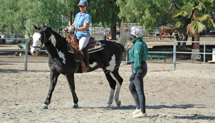 Arlyn DeCicco Pleasure Horse Training for Adults San Diego California 400×700