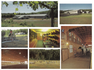 Arlyn DeCicco Horse Training Facilities