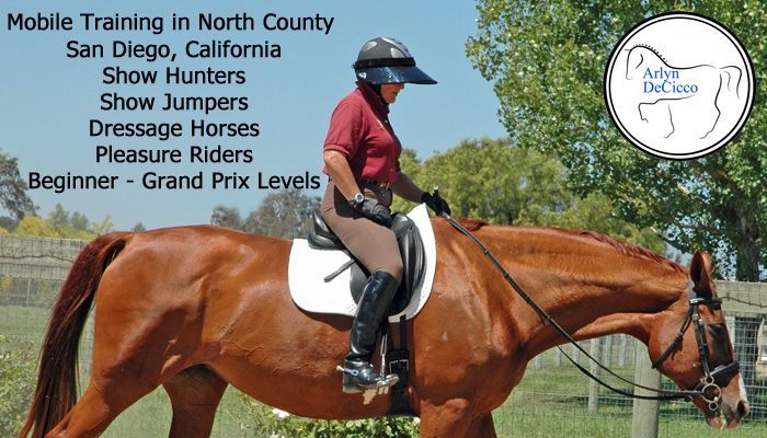 Horse Training Hunters Jumpers Dressage Horses in San Diego California by Arlyn DeCicco copy