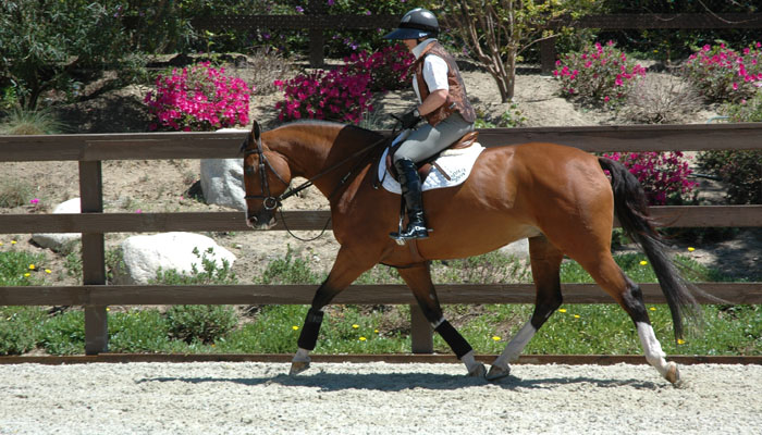 Horse Training for Champion Junior Hunters in San Diego California by Arlyn DeCicco