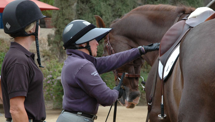 Horse Training for Grand Prix Jumpers in San Diego California