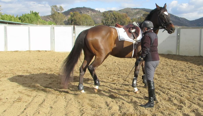 Horse Training for Off The Track Thorobreds in San Diego California