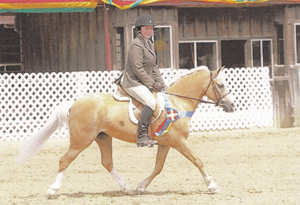Horse Training for Pony Hunters in San Diego California by Arlyn DeCicco