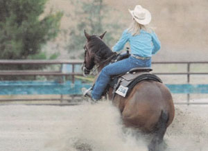 Horse Training for Reining Horses in San Diego California by Arlyn DeCicco