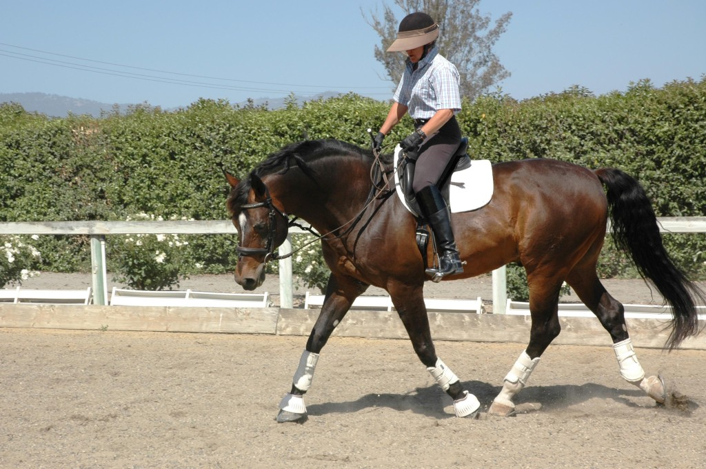 Balanced Training for Hunters, Jumpers, Dressage, Eventers and Pleasure Horses and Riders.